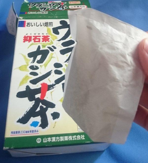 尿路結石 ウラジロガシ茶